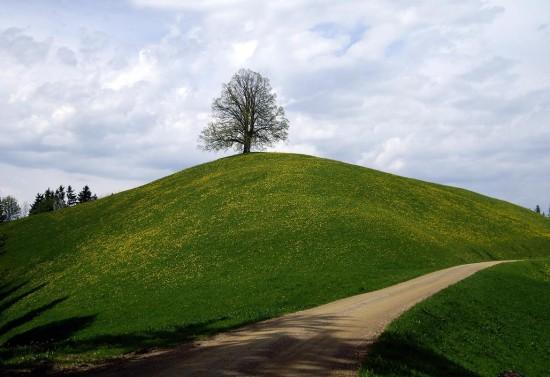 Die Linde - ein schweizerisches Kulturgut